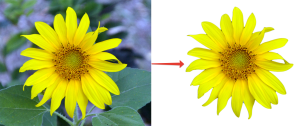 Вырезать цветок магнитным лассо